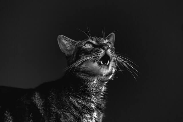 LibreShot - No copyright images